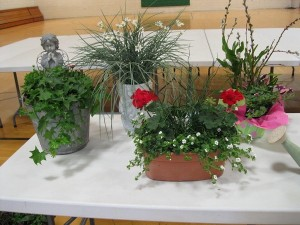 Container pots 5