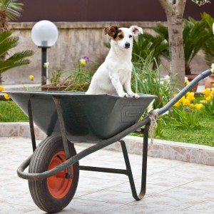 dog,wheelbarrow,gardening