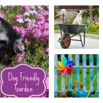 How to Grow a Dog Friendly Garden