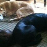 Take Care of Four-Legged Family Members the Easy Way