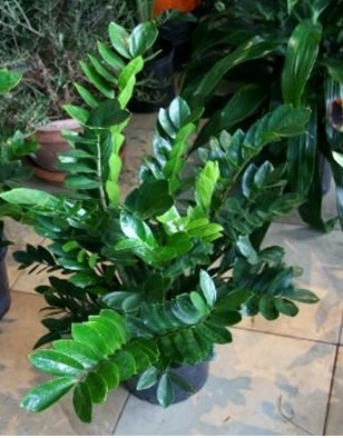 3 types of low maintenance indoor plants for busy women for Maintenance of indoor plants