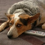 First Cable Network to Deliver 24 Hour Programming for Dogs