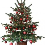 Yes, Virginia, There Is A Christmas Tree