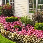Mistakes to Avoid When Buying Flowers to Plant