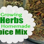 Herbs to Grow for Making Your Own Spice Mixes