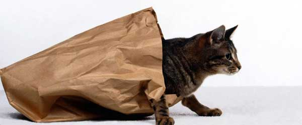 the-cat-out-the-bag